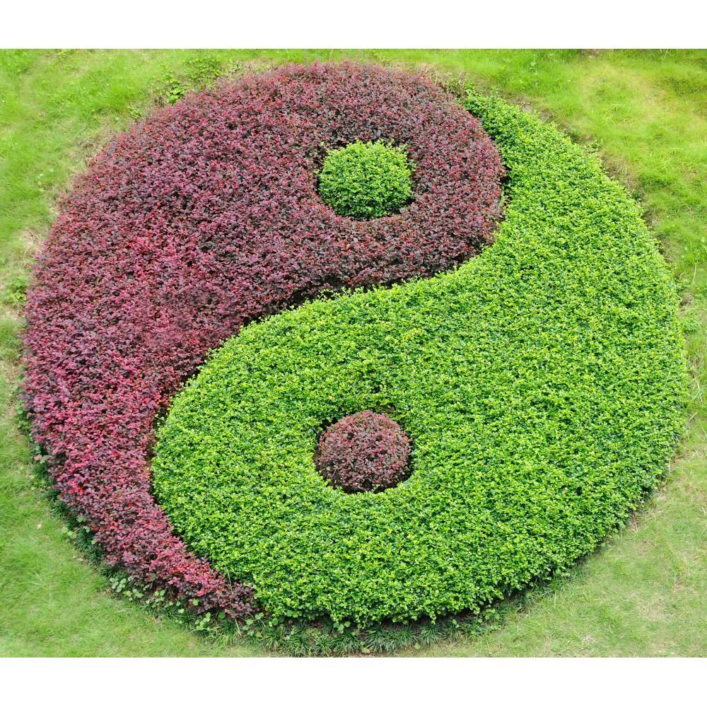 salon de jardin yin yang v rias id ias de