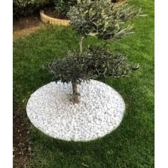Entourage d'arbre affleurant (non visible) PVC Blanc